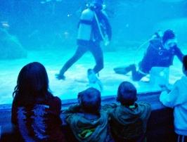 Newport Aquarium June 2014
